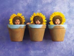 Bebês girassol Anne Geddes